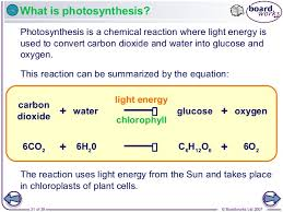 which plant cell organelle uses light energy to produce sugar 1 animal and plant cells v1 0