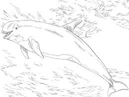 risso u0027s dolphin coloring free printable coloring pages
