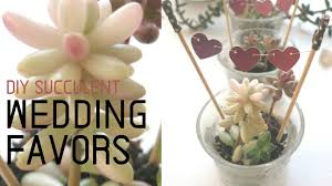 succulent wedding favors diy succulent wedding favors i like diy projects