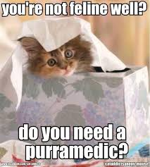Cutest Memes - 20 cutest memes for your sick friend word porn quotes love quotes
