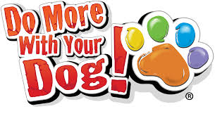 novice do more with your dog