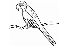 coloring parrot img 12850