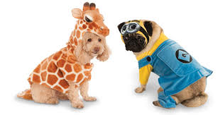 halloween pet costumes get your dog to love his halloween costume