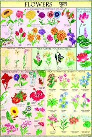 Names Of Purple by Purple Blue Flowers Flower Ideas