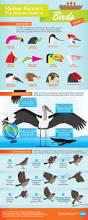 best 25 bird guides ideas on pinterest bird identification
