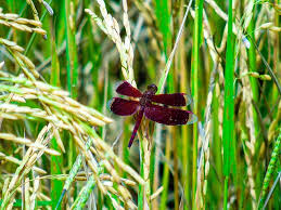 small dragonfly on treess domain free photos for
