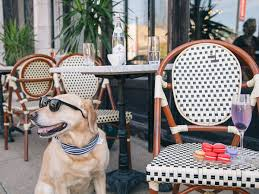 60 great dog friendly restaurants and bars in chicago 2017 edition