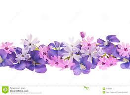 purple spring flower border royalty free stock images image
