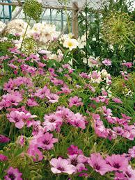 fleurs vivaces rustiques créer un massif pour 3 fois rien avec des vivaces vivace massif
