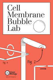 cell membrane bubble lab revisited clear biology