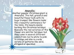 Christmas Plants 5 Popular Plants And Flowers For Christmas