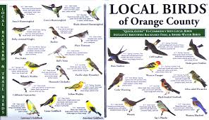 California Backyard Birds by Local Birds Quick Guides To Nature Science