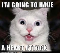 Heart Attack Meme - image heart attack cat png happy tree friends fanon wiki