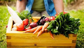 vegetable gardening tips u0026 tricks for a high yield vegetable garden