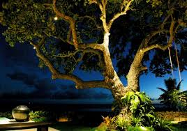 Landscape Lighting Ideas Trees Outdoor Landscape Lighting Lighting Denver My Landscaper Llc