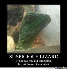 Lizard Meme - suspicious lizard meme only fine pictures