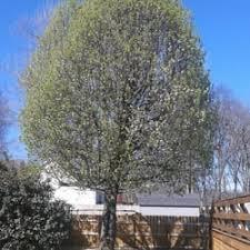 Landscaping Murfreesboro Tn by J W Bennett Tree Lawn And Landscape Tree Services 2779 Allen