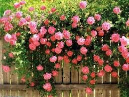 perennial garden layout ideas flower garden plans for beginners