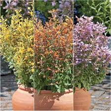 Flower Seeds Online - buy the highest quality flower seeds trusted supplier since 1879