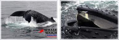 Whale Watches Cape Cod - kids dolphin fleet whale watch