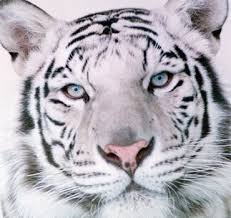 19 best favorite animals images on pinterest animals white