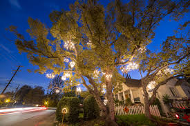 What Is Chandelier The Story Of The Magical Chandelier Tree Of Silver Lake Curbed La