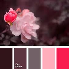 Pink Color Scheme 3174 Best Color Palette Images On Pinterest Colors Combination