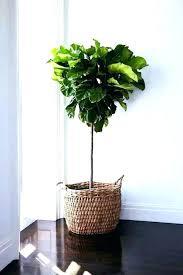 decorative indoor plants indoor plant pots house plant containers cool plant house plant pots