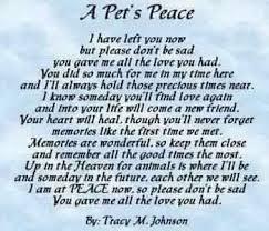pet prayer 48 best pet sympathy images on pet loss grief doggies