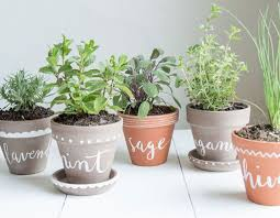 Kitchen Herb Pots Why Are My Herbs Dying Common Kitchen Herb Garden Mistakes