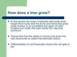 tree anatomy roots shoots leaves