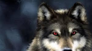 imagenes de fondo de pantalla lobos lobos 1920x1080 fondos de pantalla y wallpapers
