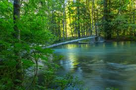 nature forest river summer nature hd wallpaper free download for