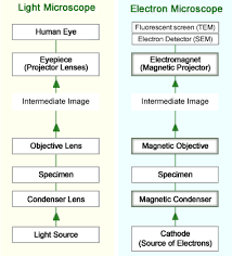 name one advantage of light microscopes over electron microscopes what is an electron microscope as biology