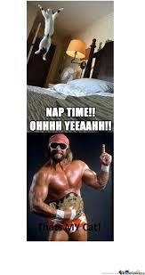 Macho Man Memes - macho man s cat by demonblackdragon meme center