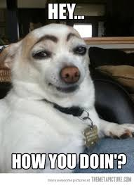 Funny Dog Face Meme - someone has a thing for the ladies light colored hair colored