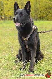 belgian shepherd kinds dog harness german shepherd breed walking training jogging