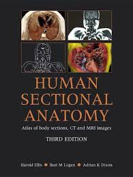 Anatomy Of Human Body Pdf Human Sectional Anatomy Atlas Of Body Sections Ct And Mri Images