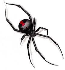 diy giant spider web confettidea