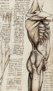 leonardo da vinci anatomical study of the muscles of the side of