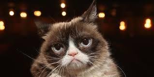 Grumpy Cat Snow Meme - grumpy cat wins 710 001 lawsuit over coffee