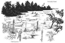 coloring pages of animals in their habitats bird id skills habitat all about birds
