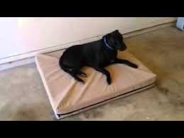 large dog beds u2013 my pet store