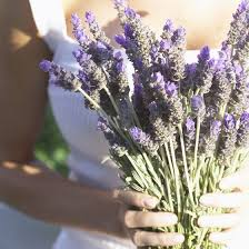 lavender tea what are the benefits of lavender tea healthy living