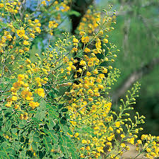 landscape plants for the arizona desert arizona municipal water