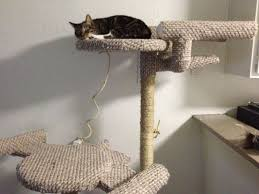 Cool Cat Furniture 20 Wonderful Pieces Of Furniture For Pets Homes And Hues