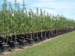 nursery production systems and tree survival alliance for