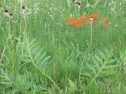 what is native plants native plants 101 what is a native plant
