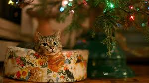 sweet christmas gifts wallpapers cute christmas cat full hd 1080p wallpaper 1920 1080 cat