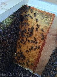 beekeeping equipment decisions kenyan top bar hive part 3